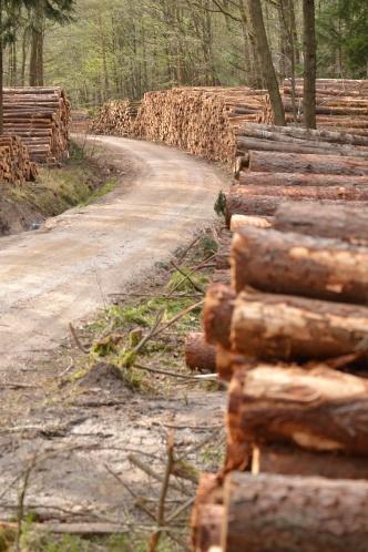 Holzpolter am Wegesrand